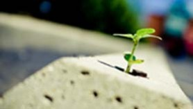 Growth in spite of obstacles!